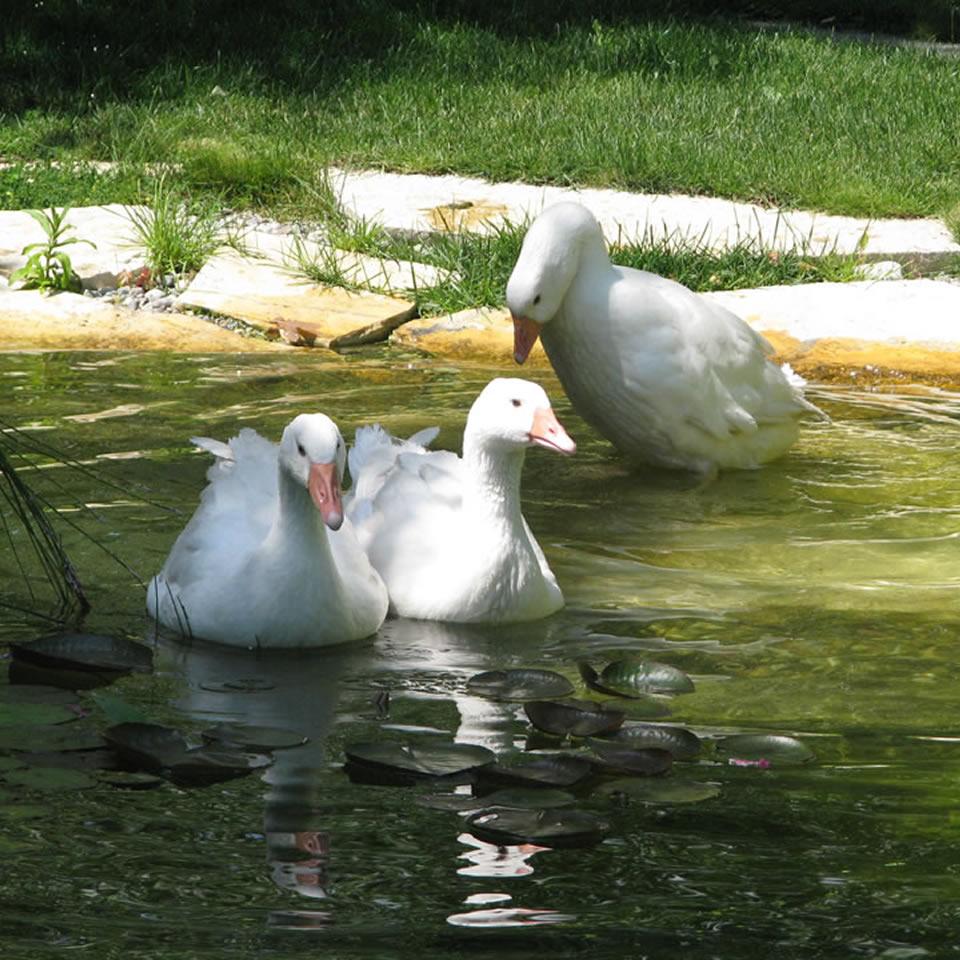 Il giardino d 39 acqua come spazio di contemplazione e benessere biolaghi acqua e giardino - Giardino d acqua ...