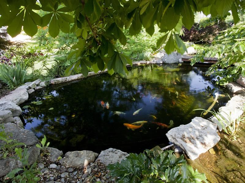 I pesci ideali per un laghetto da giardino piante fiori for Pesci per laghetti esterni