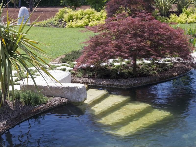 Progettazione e realizzazione di un biolago balneabile in giardino piante fiori e animali - Biopiscina fai da te ...