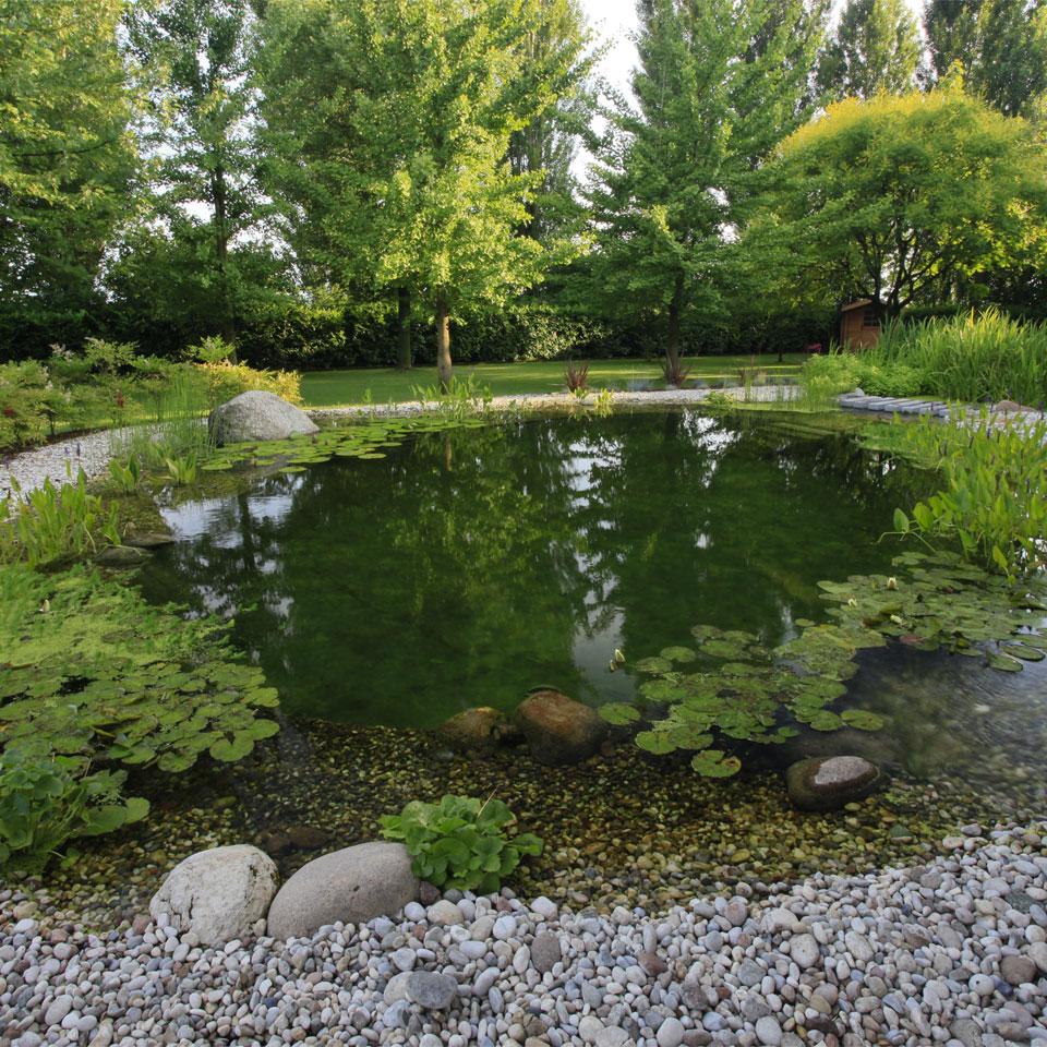 Articoli biopiscine ecolaghi e piscine naturali for Pesci per stagno